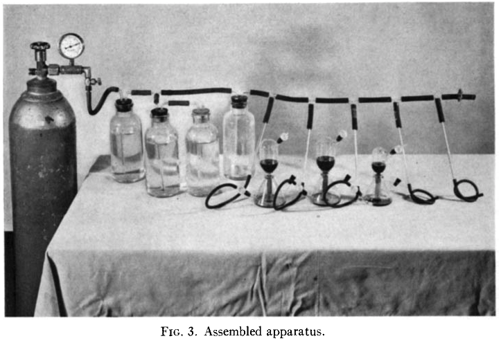 Series of culturing flasks connected to a gas line.
