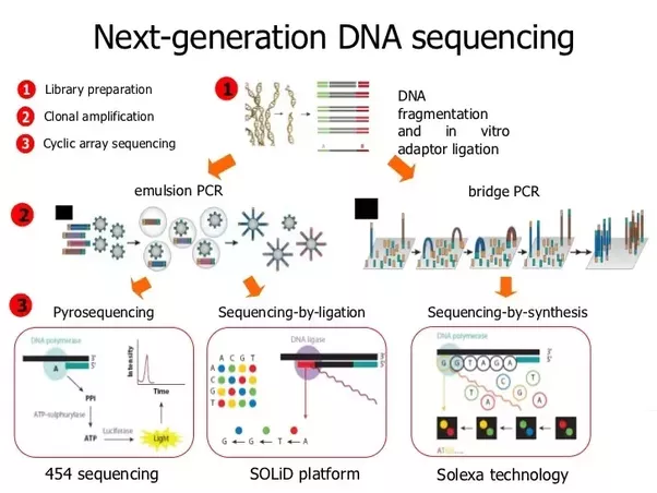 Figure 1: Process Schematic for NexGen Sequencing