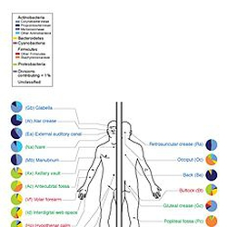 Cluster: Microbiome and gut health - Wiki | Golden